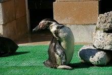 毎日はっぴぃ気分☆-ペンギン