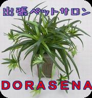 出張ペットサロンDORASENAのブログ