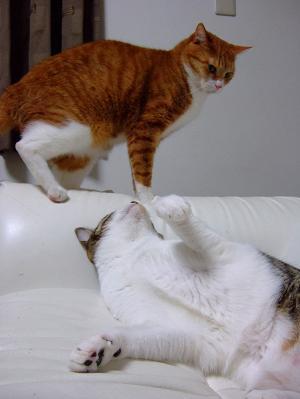 ◆ネコぶろぐ◆