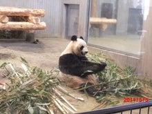 $キャリア・マム関東ブログ-上野動物園4