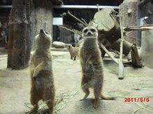 $キャリア・マム関東ブログ-上野動物園6