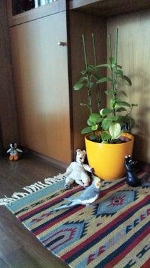 オカメインコのももちゃんと花教室と旅日記-110518_074803.jpg