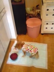 老犬2匹 介護だぞ~16歳ビーグル&13歳盲目のチワワ-110519_1007~01.jpg
