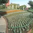 白鳥公園花壇