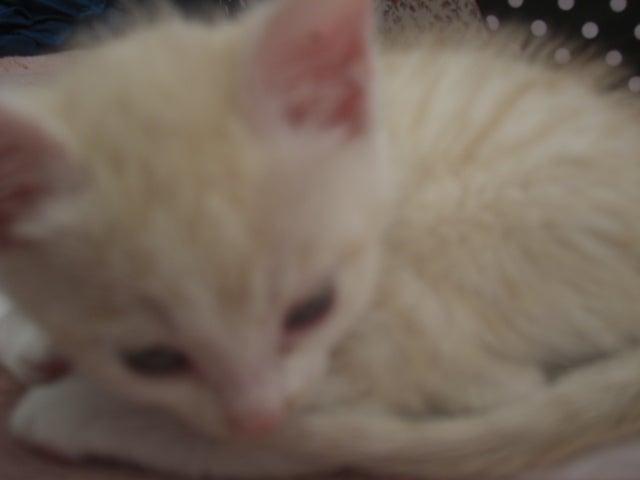 長崎の保健所の命を救う会の代表のブログ 長崎県の動物愛護団体です 犬と猫の里親譲渡会を毎月開催-リク君のゆううつ・・・