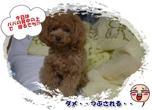 Mokoちゃん大好き