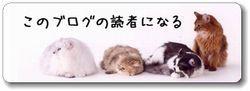 $Dog&Cat Model +゚*。:゚+ 3dogs+4cats +゚:。*+