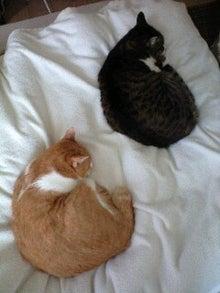 ずれずれブログ…湘南で猫と暮らせば…-110525_1452~0001.jpg