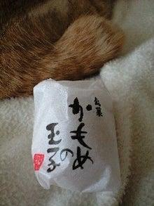 ずれずれブログ…湘南で猫と暮らせば…-110525_1504~0001.jpg