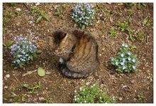 毎日はっぴぃ気分☆-蒼い花に囲まれニャンコ
