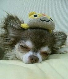 ☆ Chocomilk Diary ☆