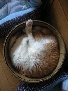 ずれずれブログ…湘南で猫と暮らせば…-110526_0827~0001.jpg
