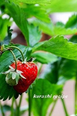 $旬菜料理家 伯母直美  野菜の収穫体験ができる料理教室 暮らしのRecipe-イチゴ