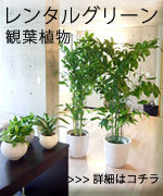グリーンレンタル・観葉植物リース サービス:フローリスト・アン