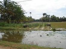 オークントムトム!カンボジア