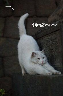 渋谷美容室 parkstreetの日常を赤裸々に告白します。-猫ってヤツは!