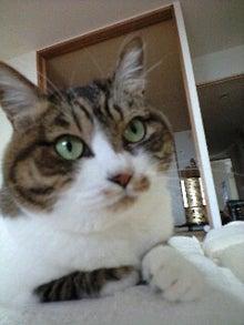 ずれずれブログ…湘南で猫と暮らせば…-110530_0742~0001.jpg