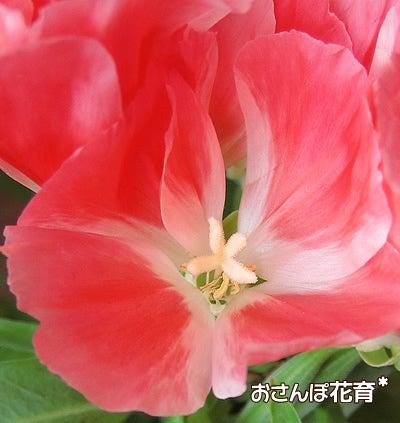 動画で見る!3分フラワーアレンジ-ゴデチャ 花のアップ