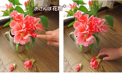 動画で見る!3分フラワーアレンジ-しぼんだ花はポロポロ落ちます