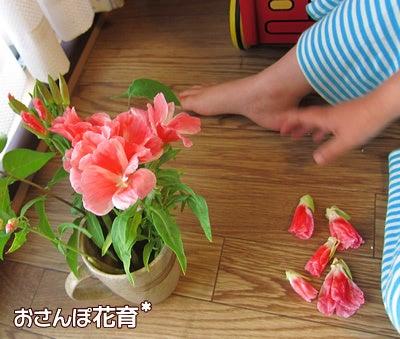 動画で見る!3分フラワーアレンジ-お花さんいっぱい集めた♪