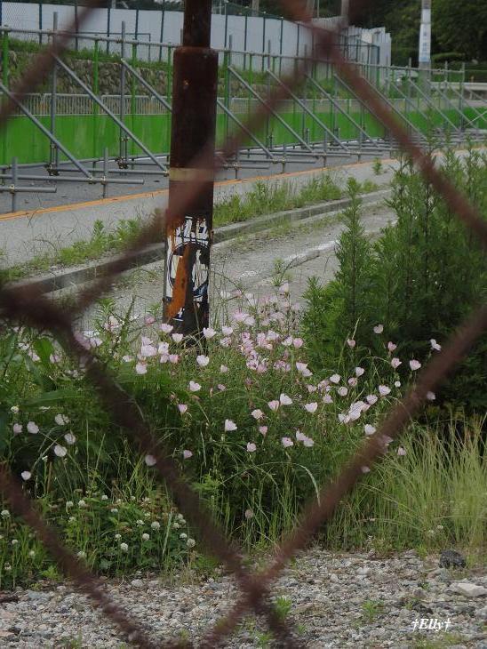 $六甲山麓里山写真館~田舎スローライフの風景~
