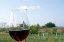 食べて飲んで観て読んだコト-葡萄畑とワイン