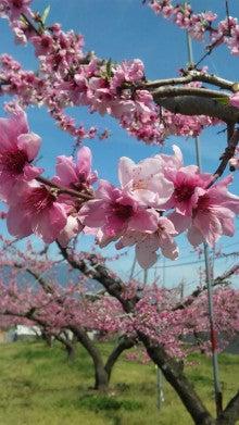 仲山農園のブログ-DVC00753.jpg