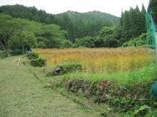 農トレ in 棚田【農業を好きになろう】-麦in棚田(下から)