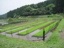 農トレ in 棚田【農業を好きになろう】-お米の苗