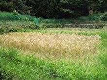 農トレ in 棚田【農業を好きになろう】-大麦