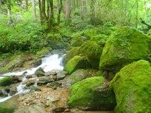 $ようこそ、「エコロの森」へ!