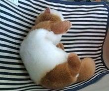 ひろみちゃんと10pooのおきらくブログ-クールポケットハンモック就寝中