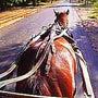 『 馬車馬 』