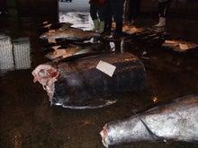 沖縄から遊漁船「アユナ丸」-6月の釣果
