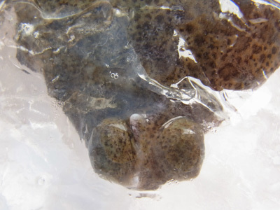 $オトメゴコロの「泉州おむすび」
