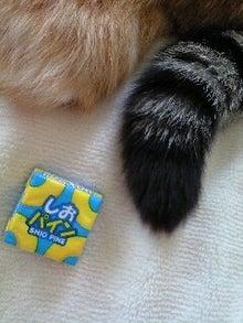 ずれずれブログ…湘南で猫と暮らせば…-110613_1243~0001.jpg