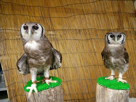 フクロウ、インコ、ペンギンと遊ぶ掛川花鳥園 鳥達の飼育日記