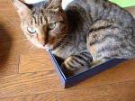 衣裳箱-箱猫