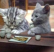 「ネコジマン」の公式ブログ