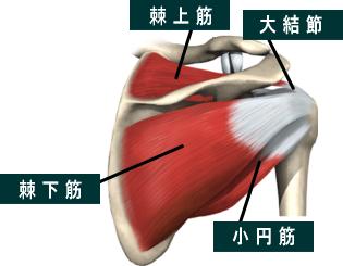 スポーツマッサージ&ストレッチ  ソフトバランス整体神戸棘上筋(きょくじょうきん)・野球肩 [2011/6/16]