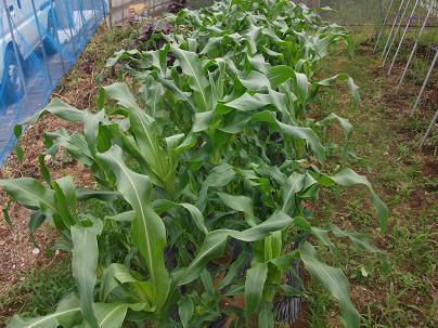 農業のトータルコーディネータ  イノウエ農商事のブログ-06163