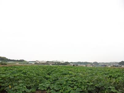 農業のトータルコーディネータ  イノウエ農商事のブログ-06161