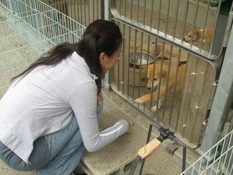 宮城県内の譲渡動物情報 - 宮城県公式ウェブサイト