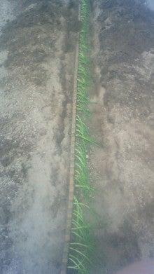 農業ビトNAOKAZUの日記-201106181010002.jpg