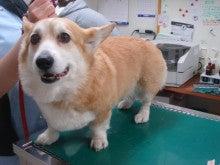 ペットの「がん」 ―レオどうぶつ病院腫瘍科―-術後3カ月全身
