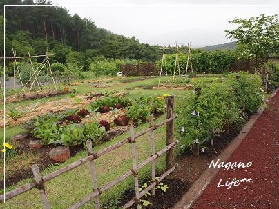 Nagano Life**-畑