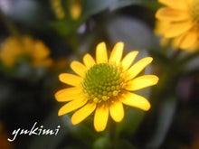 ♪花からのメッセージ♪