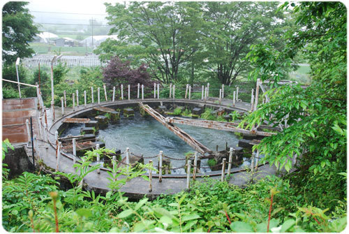 ひばらさんの栃木探訪-ひばらさんの栃木探訪 杉並木公園