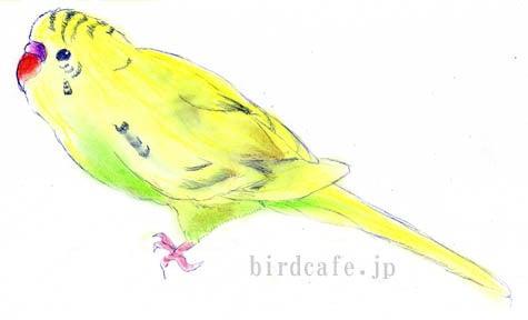 ようこそ!とりみカフェ!!~鳥カフェでの出来事や鳥写真~-塗り絵を使って黄ハルクイン