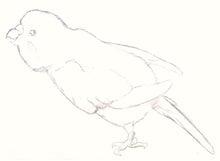 ようこそ!とりみカフェ!!~鳥カフェでの出来事や鳥写真~-鳥ぬりえーセキセイインコ